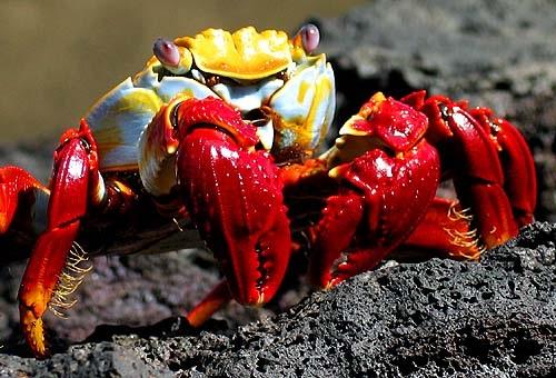 What Is a Crustacean - Information on Crustaceans  |Phylum Arthropoda Marine